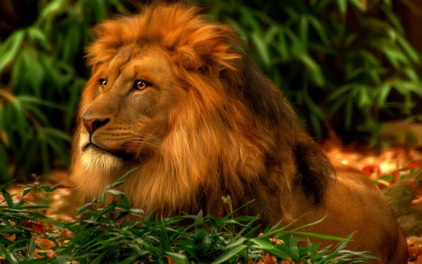 Powerful Lion Wallpapers for Your Desktop 1440x900