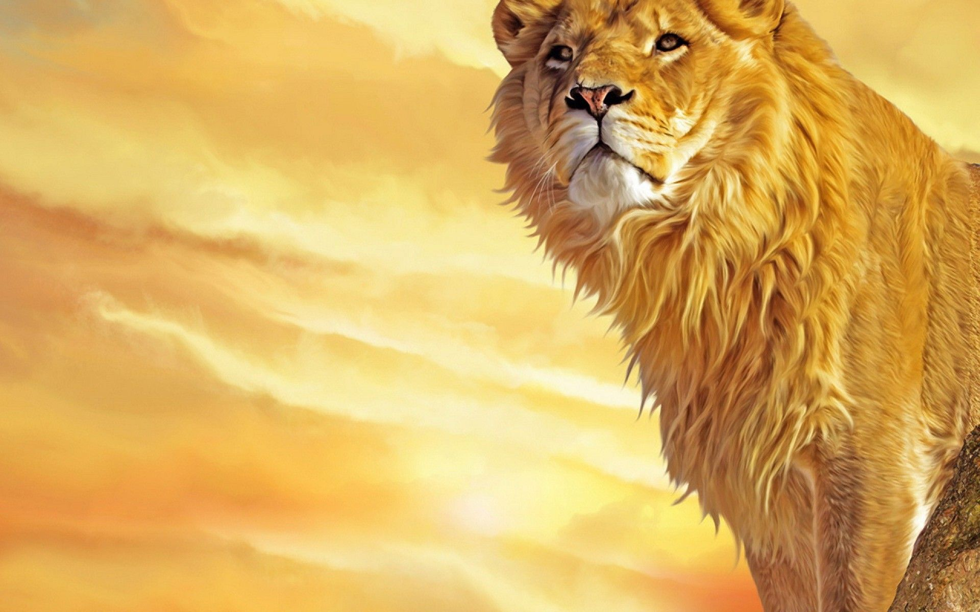 K Ultra HD Lion Wallpapers HD, Desktop Backgrounds  1920x1200