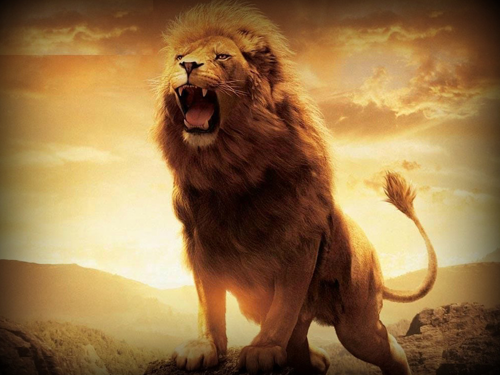 lion wallpaper hd (19 wallpapers) – adorable wallpapers