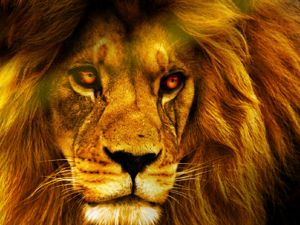 Best Mobile Wallpapers Hd Lion Free Wallpaper Download 1024x768