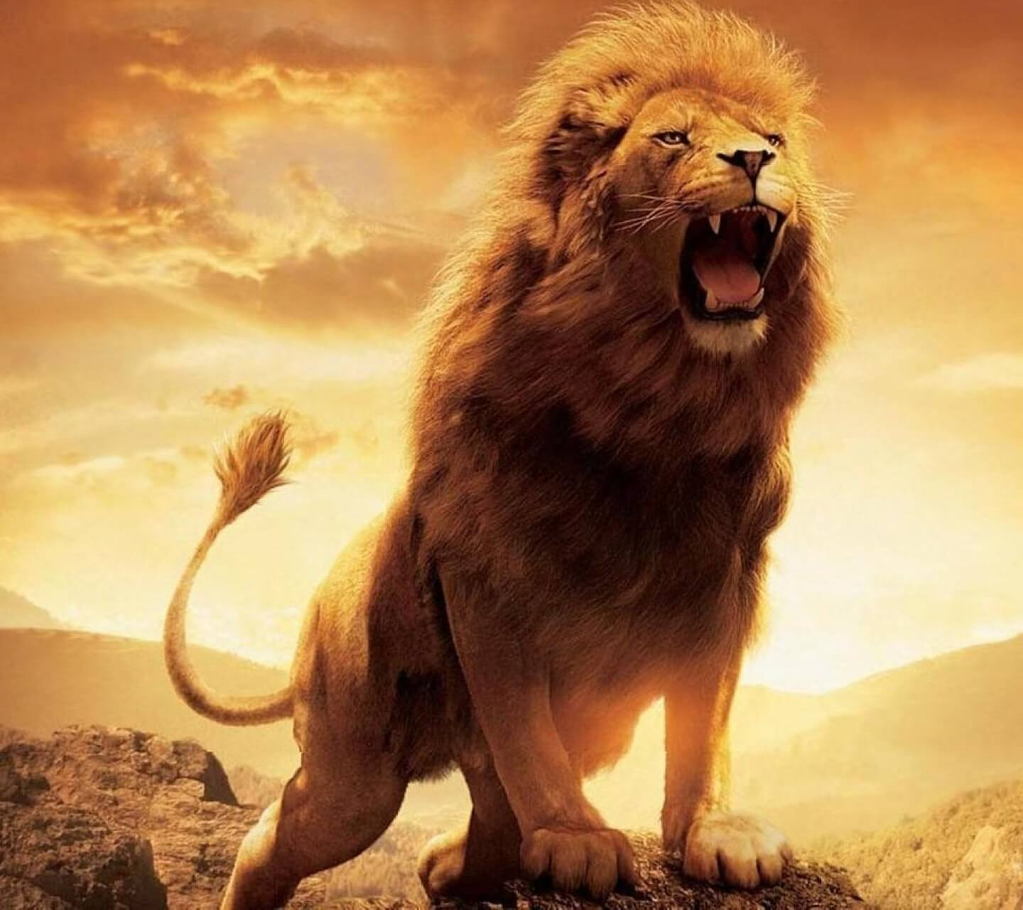 Lions images wallpapers 46 wallpapers adorable wallpapers - Show me a picture of the tiger ...