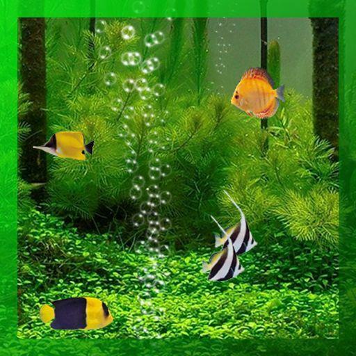 Live aquarium wallpaper 4 wallpapers adorable wallpapers for Live fish aquarium wallpaper