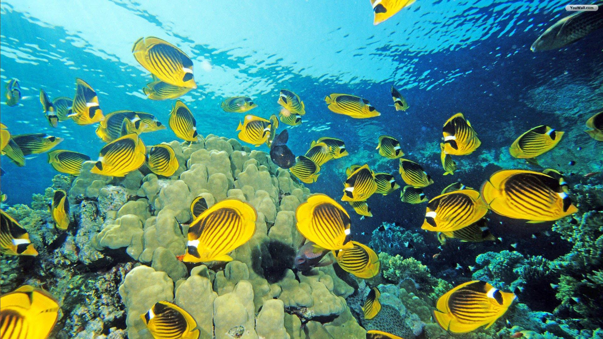 Colorful Tropical Fish Oceantransparent Waterhd Wallpaper For