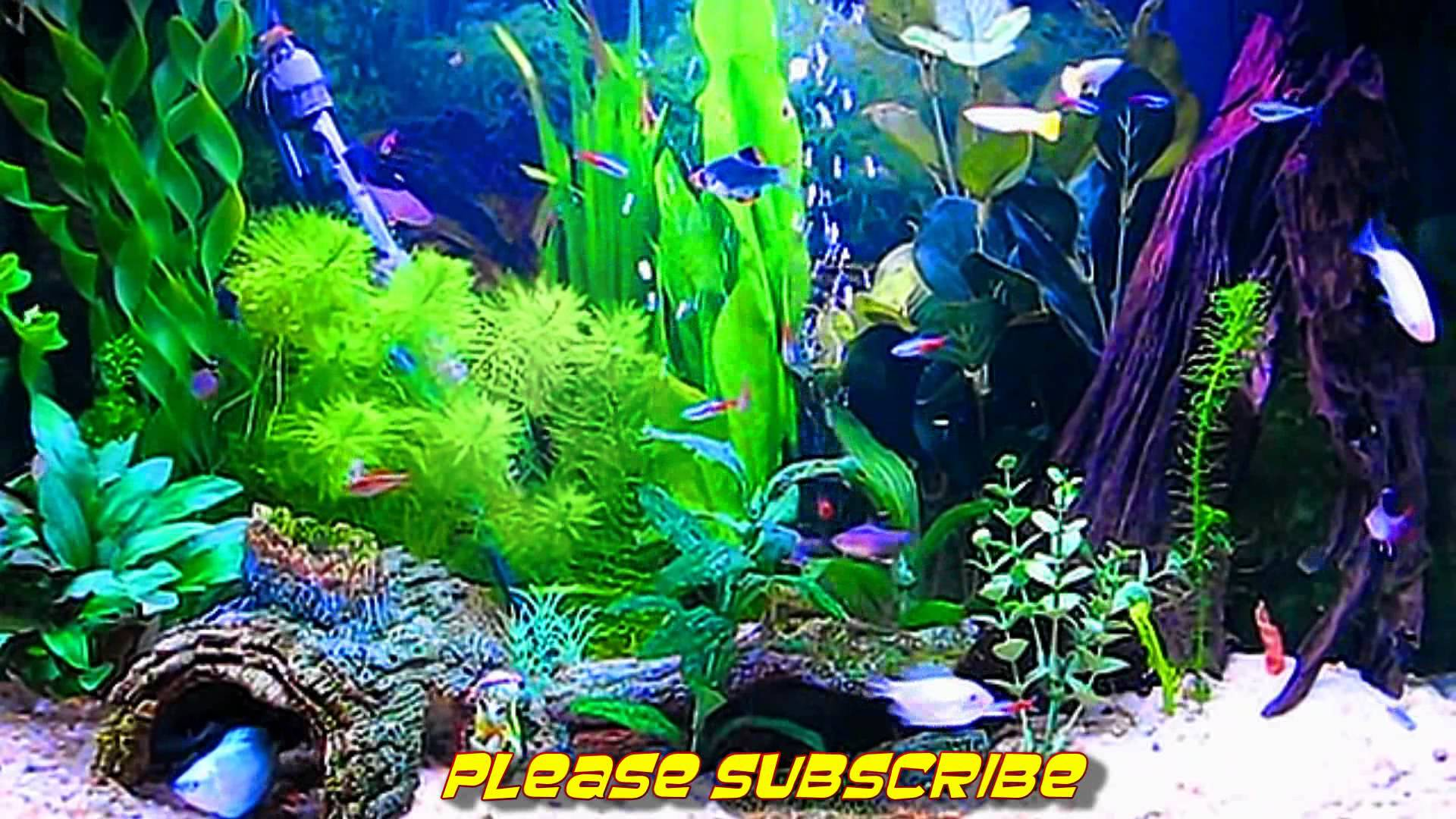 koi fish live wallpaper full version free download koi fish