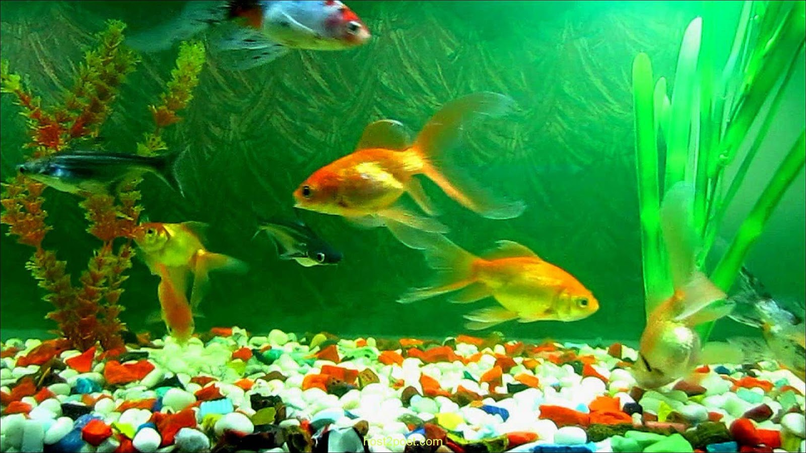 live fish wallpaper for desktop download 33 wallpapers