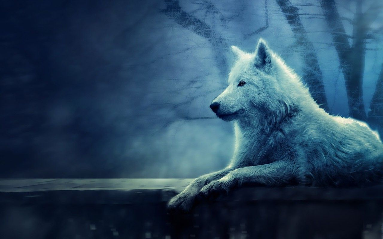 Download Free Lone Wolf Wallpapers For Your Mobile Phone Top 1280x800