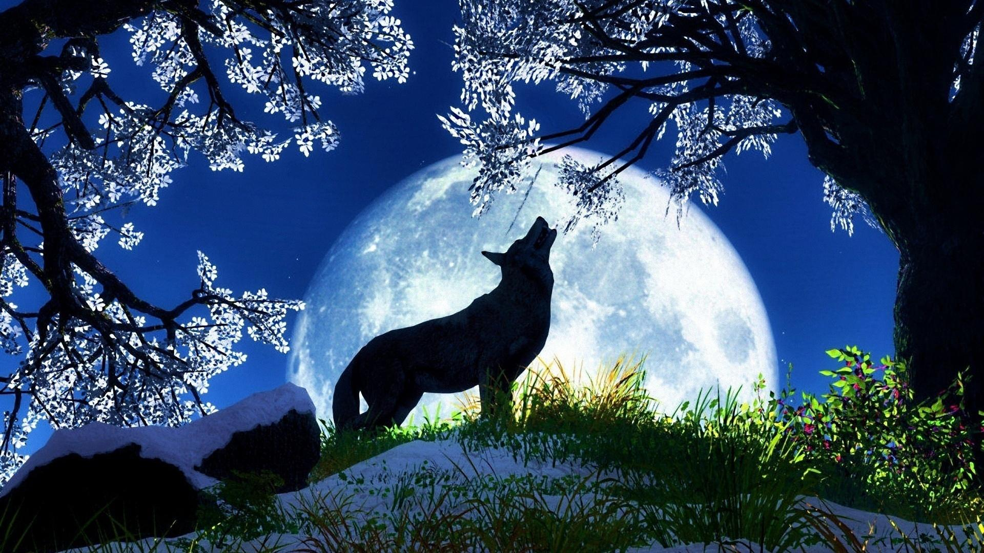 Moon Wallpapers Hd Group 1920x1080