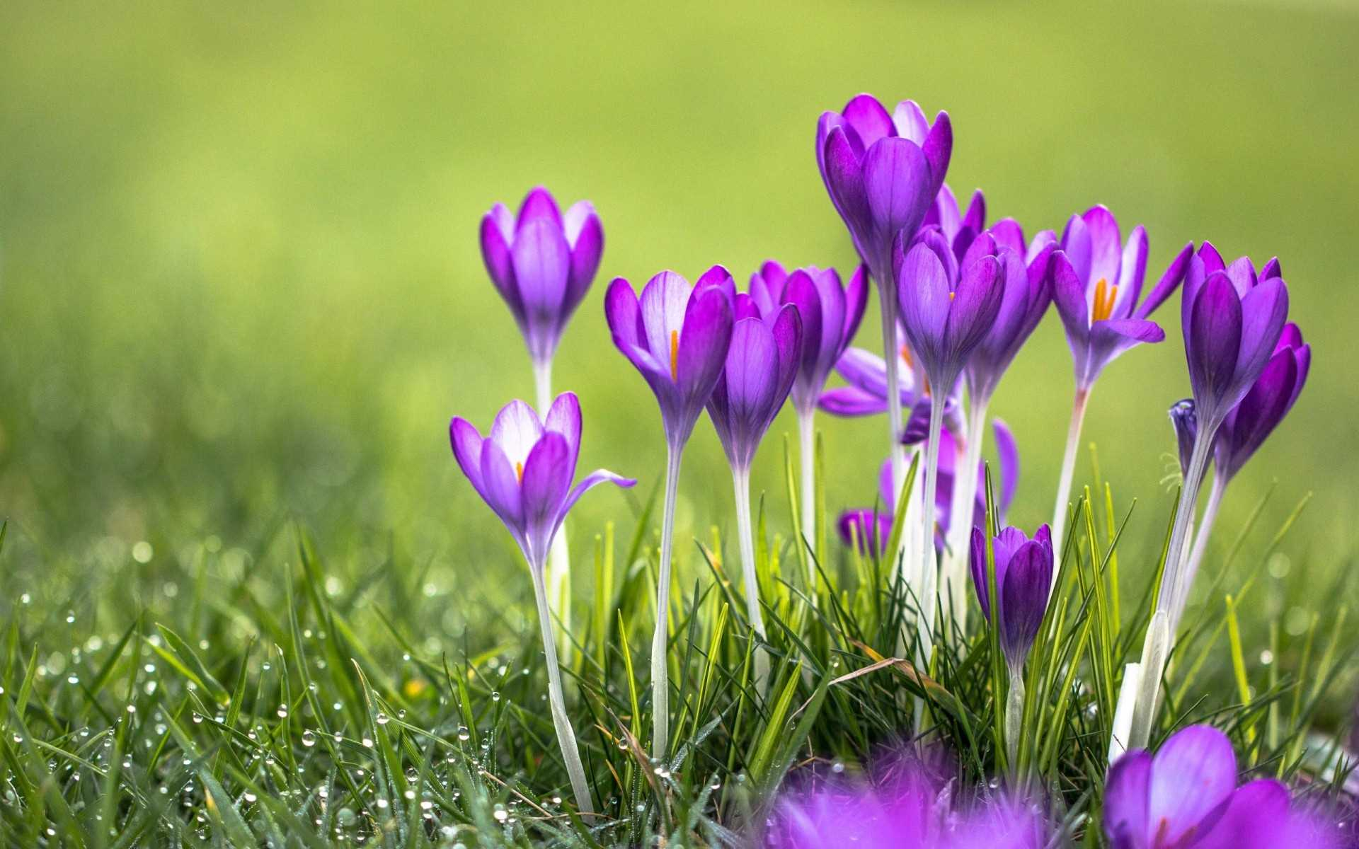 Most Beautiful Flowers Animated Wallpapers