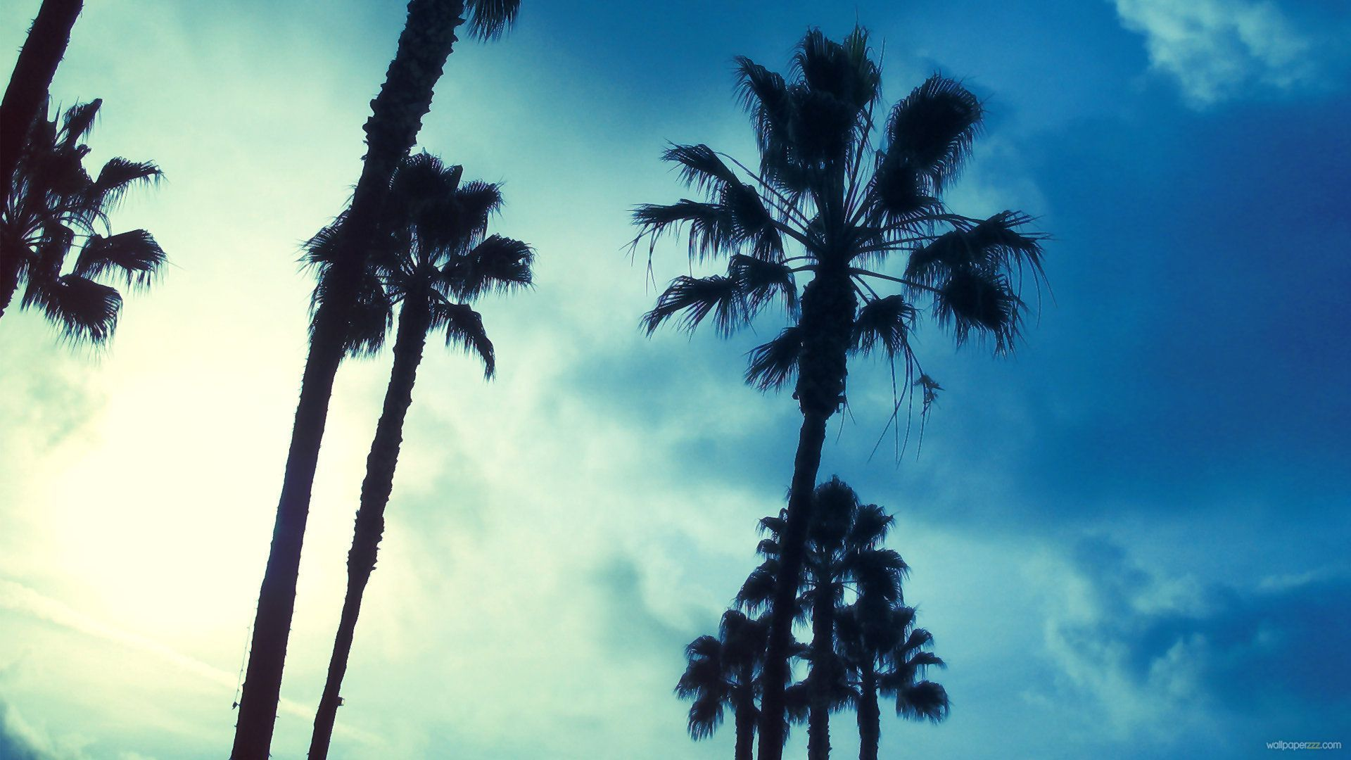 Palm Trees wallpaper  wallpaper free download 1920x1080