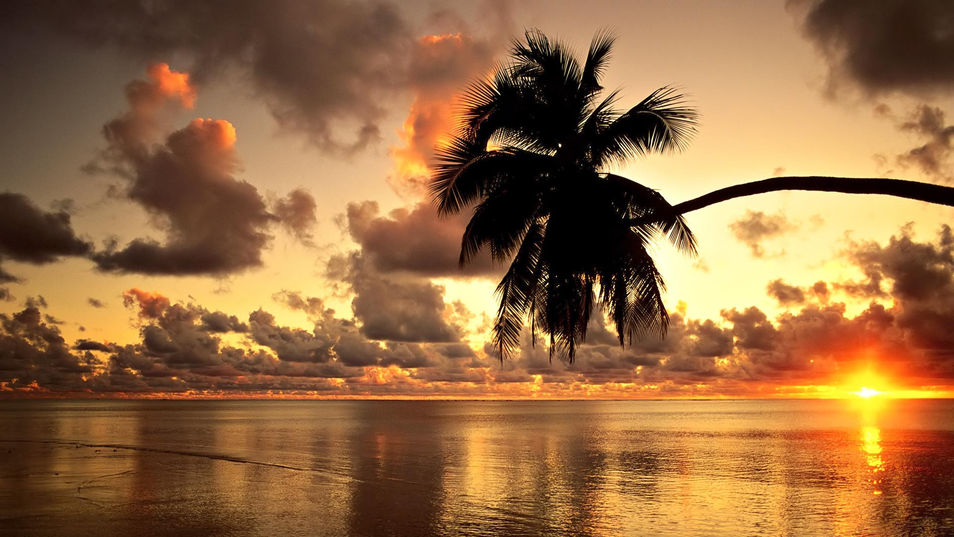 Cute palm trees wallpaper  Girly wallpapers  Pinterest  Trees 1920x1080