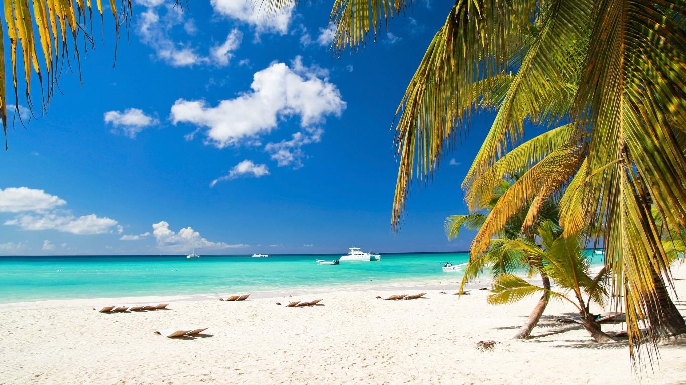 Caribbean Beach Palm Tree Wallpaper Download Hd Wallpapers