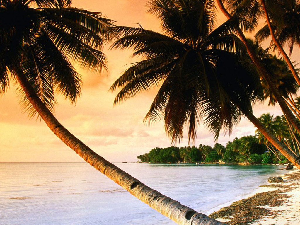 palm trees beach wallpapers 32 wallpapers � adorable