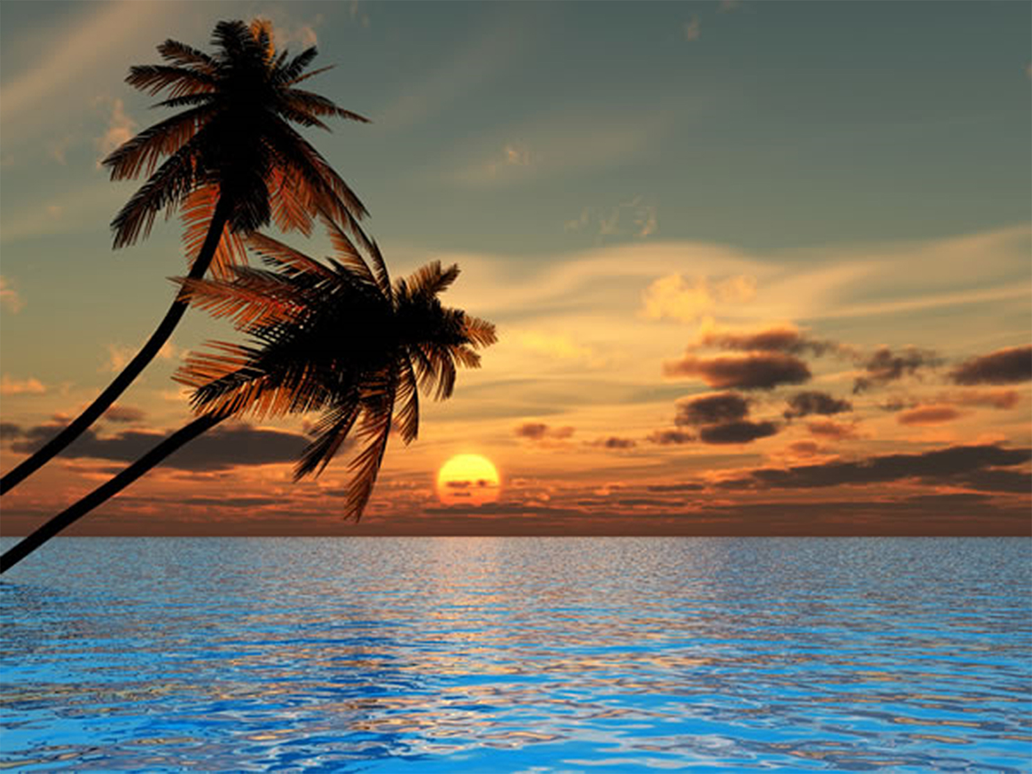 Tropical Paradise Beach And Palm Tree Iphone Wallpaper