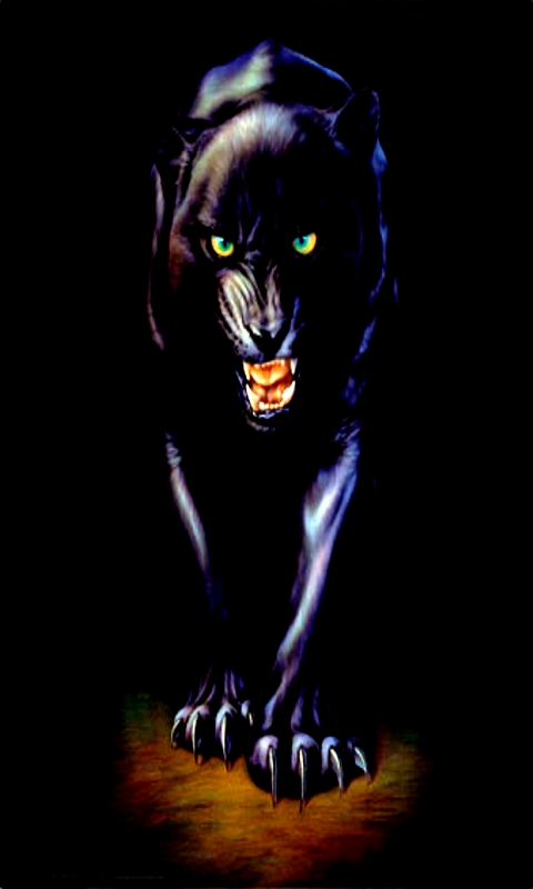 1280x720 Px Panthers Animals Collection 9 Wallpapers