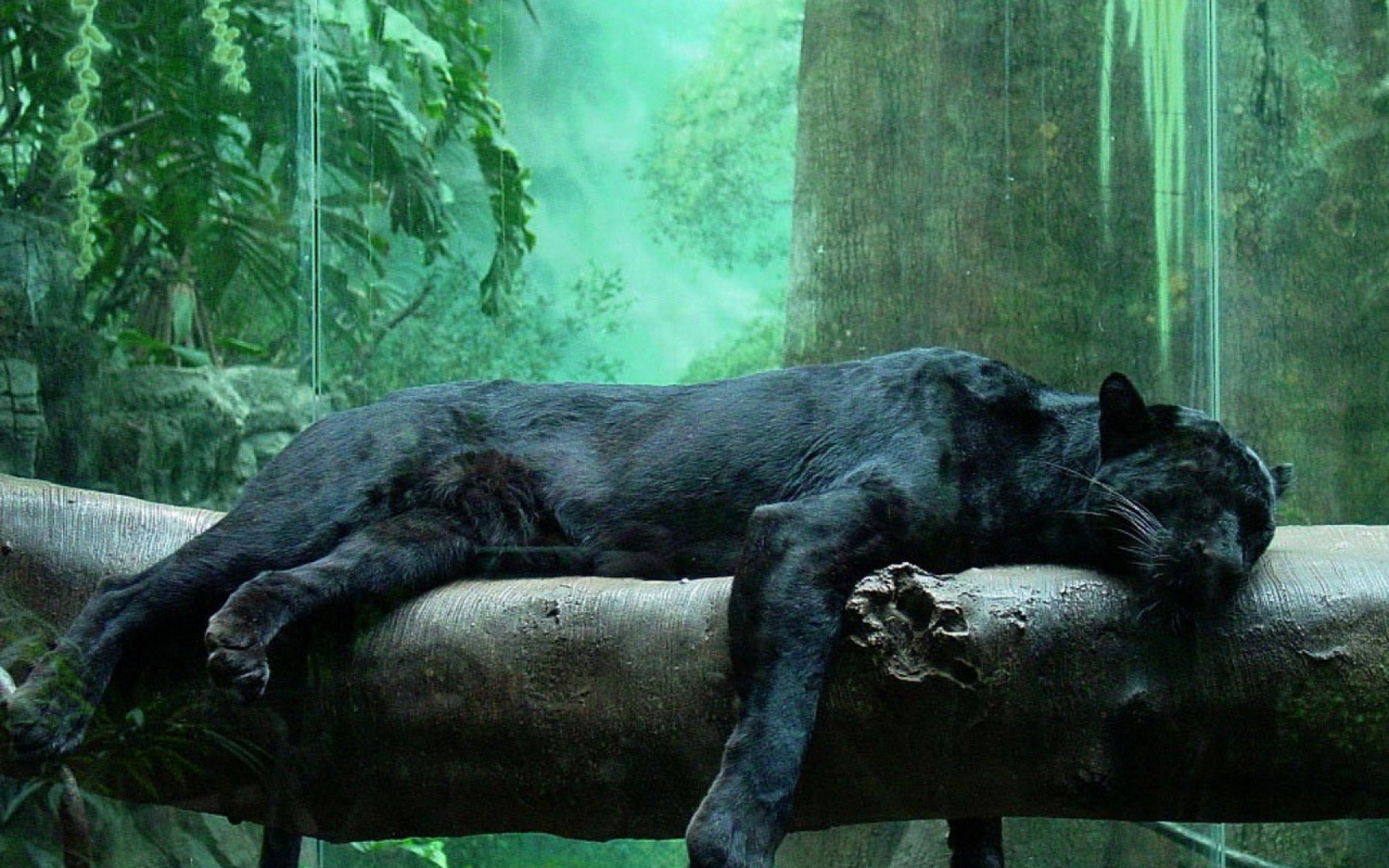 Panther Wallpapers APK for iPhone  Download Android APK GAMES 1920x1200