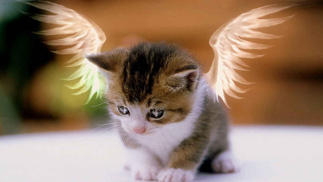 Cute cats wallpapers free download 1366x768 - Cute kitten wallpaper free download ...