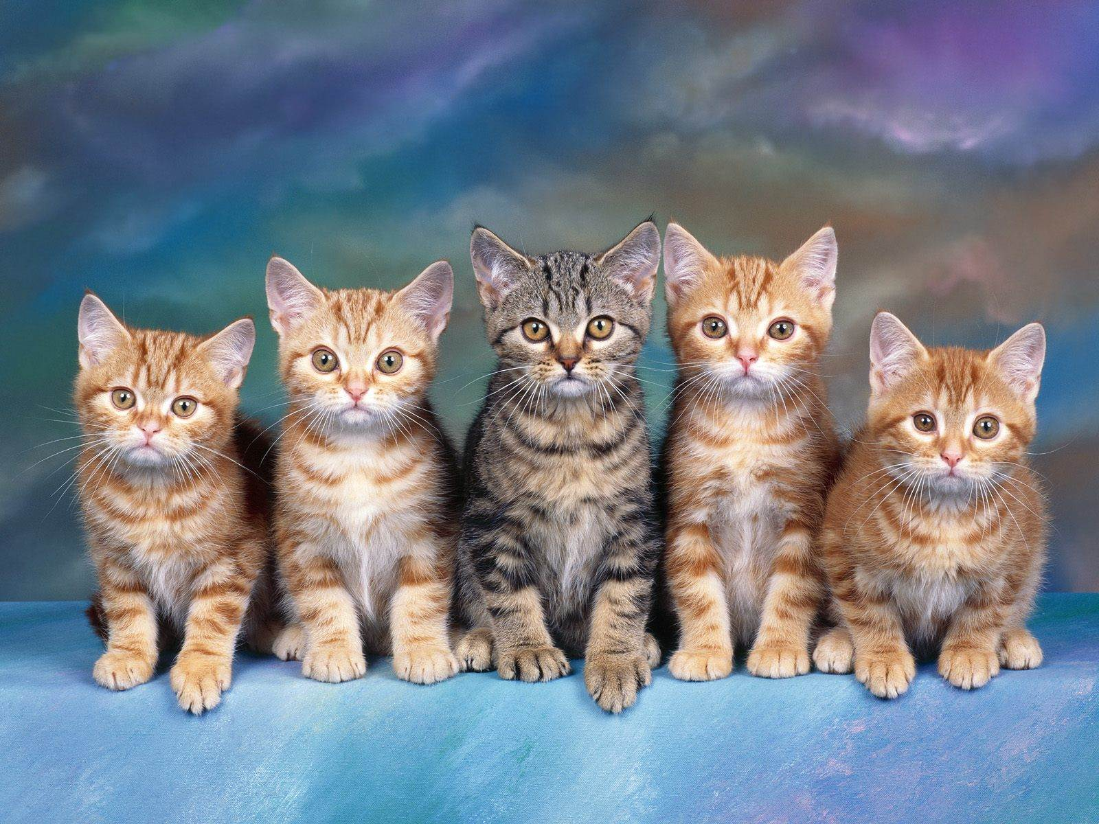 Free kittens wallpaper adorable wallpapers download in original size thecheapjerseys Choice Image