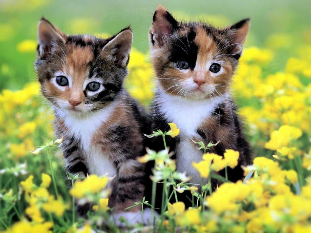 Cats And Kittens Wallpapers 1024x768