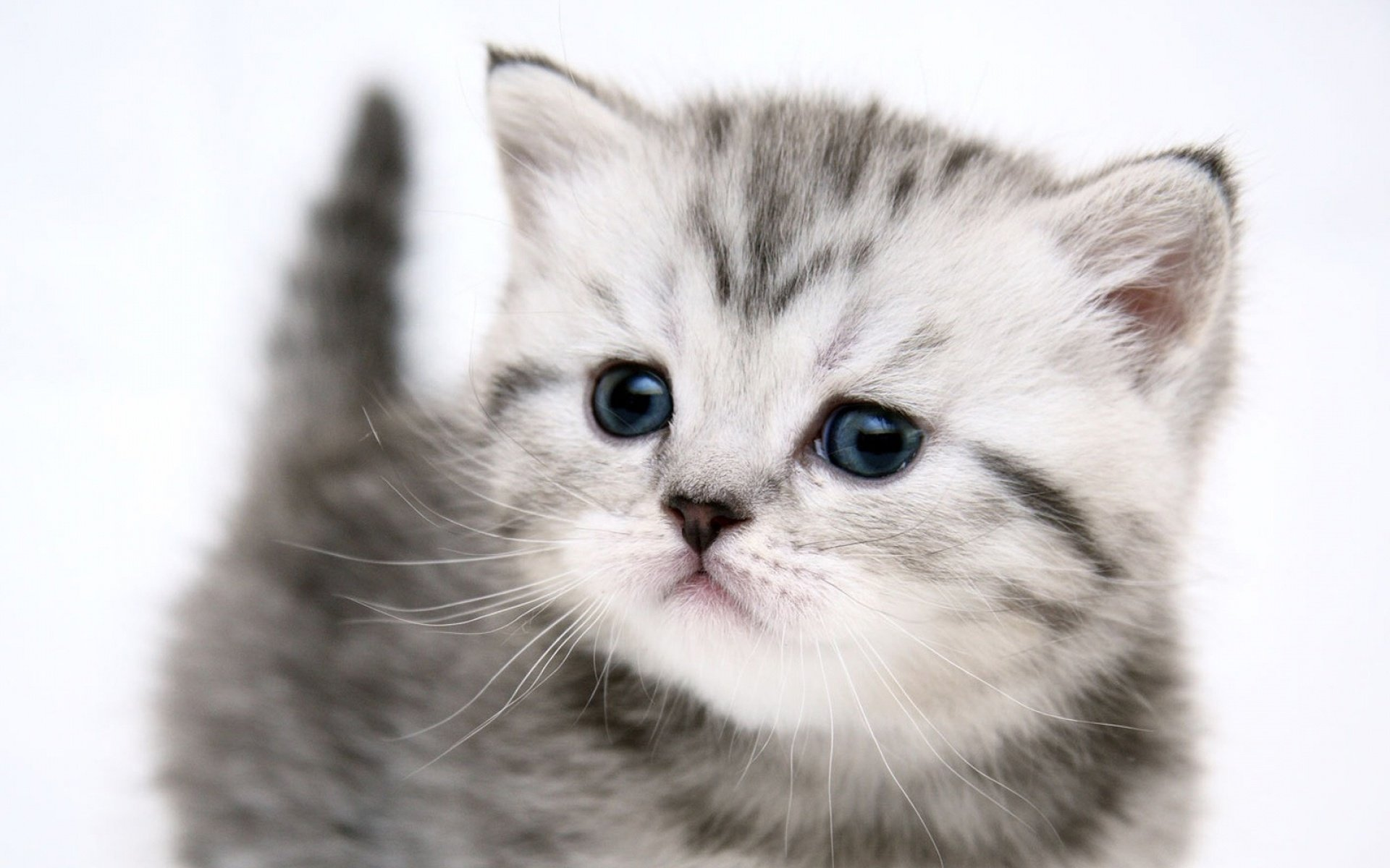 Cute Kittens Wallpapers 68 Wallpapers – Adorable