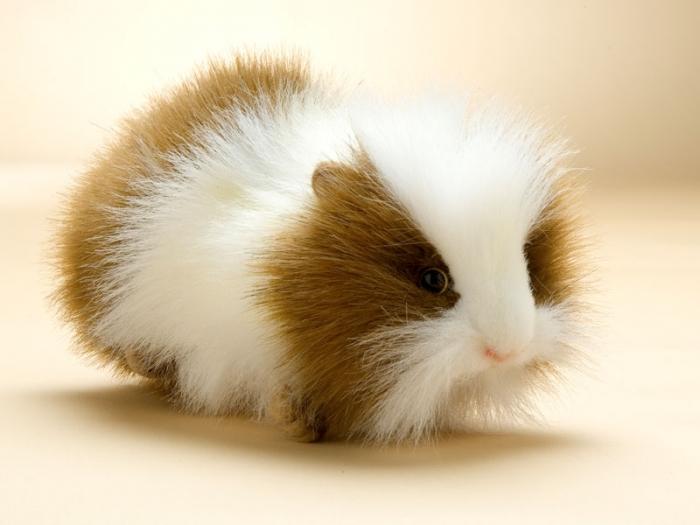 2048 Cute Guinea Pig