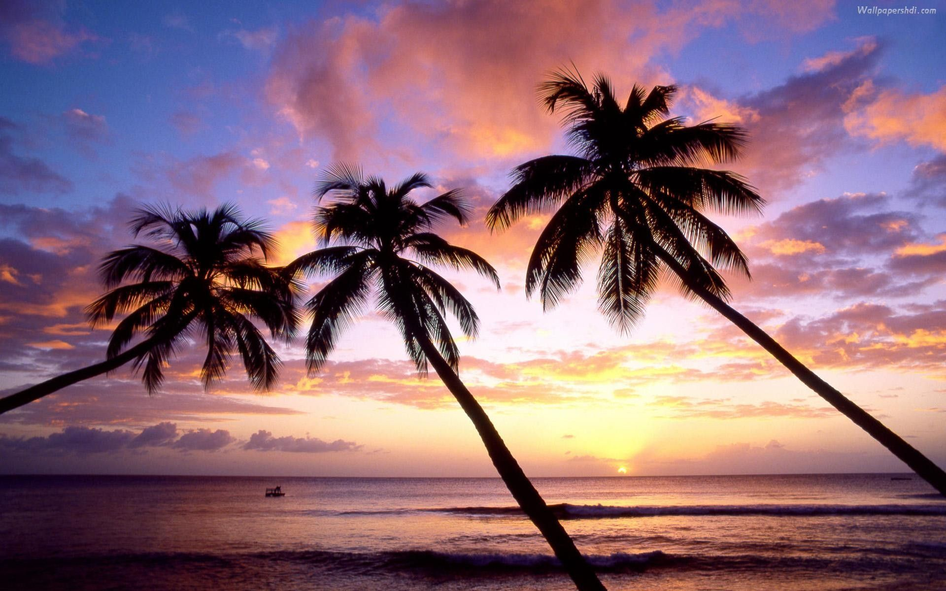 pictures of palm trees wallpapers 40 wallpapers