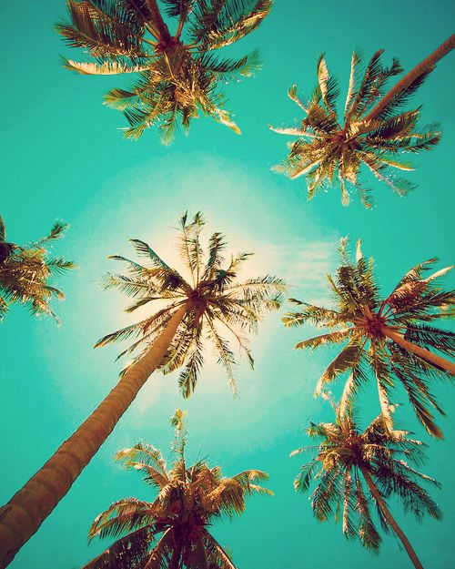 Palm tree wallpaper  Etsy 500x625