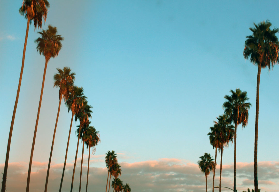 California Tumblr Photography Palm Trees  wallpaper Sunflower Palm Trees Wallpaper  Free wallpaper download 1152x793