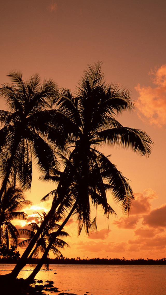 Full HD p Palm trees Wallpapers HD, Desktop Backgrounds 640x1136