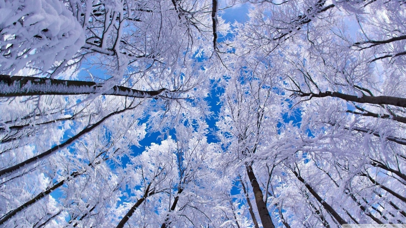 Season Backdrops Winter Backgrounds Snowy Backdrop Snowflake J