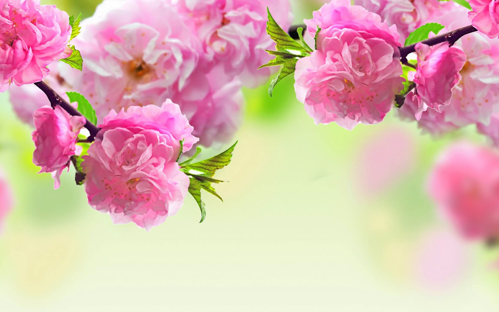 Pink color flower hd wallpaper ltt pink color flower hd wallpaper magenta flowers wallpapers awesome magenta flowers pictures and 16001000 mightylinksfo