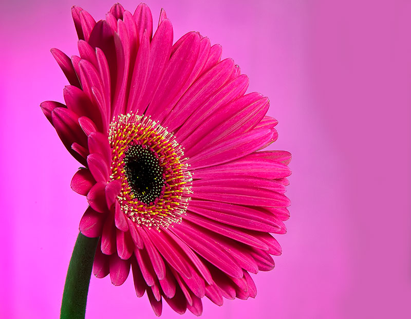 Index of wp contentuploadspink flowers wallpaper pink flowers wallpap mightylinksfo Image collections