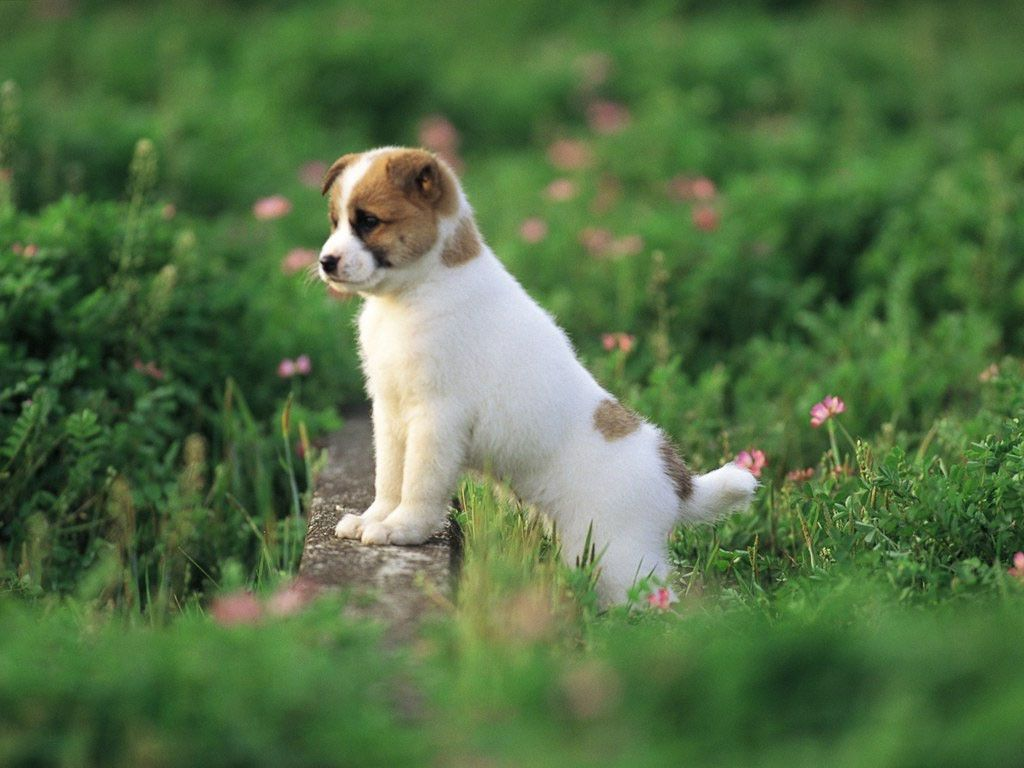 Cute Puppy Wallpapers Wallpaper With Puppies Free Download Hd For 1024x768