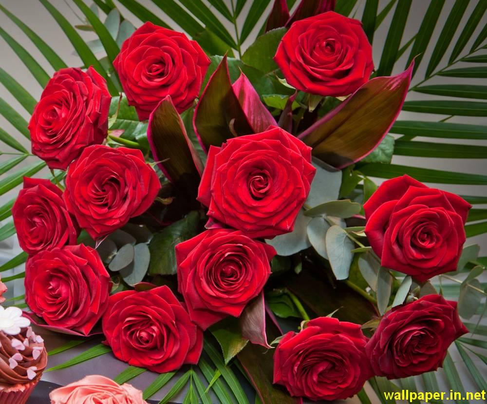 red rose desktop wallpapers 37 wallpapers � adorable