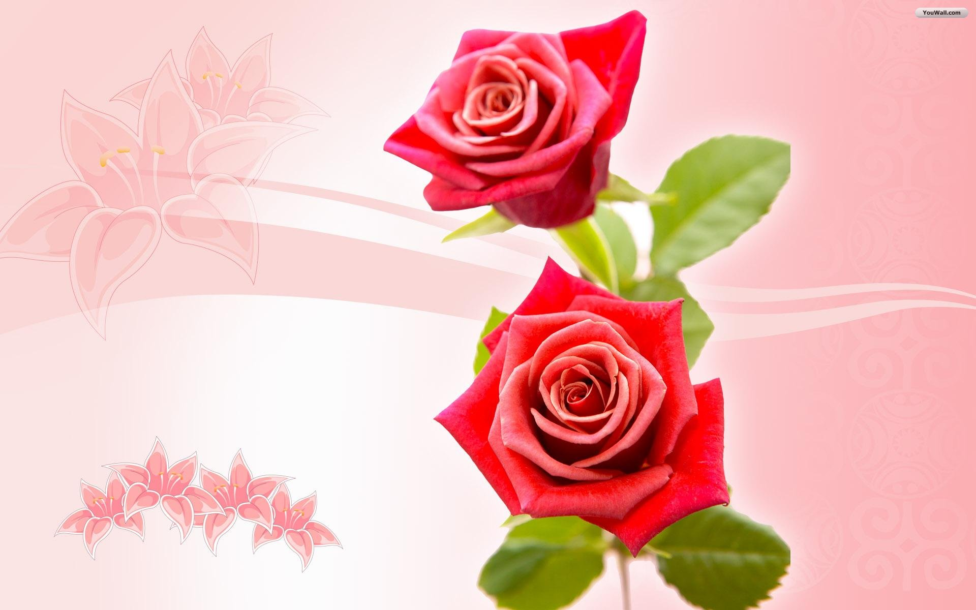 Only Red Roses High Quality Wallpapers  Infotainment 1920x1200