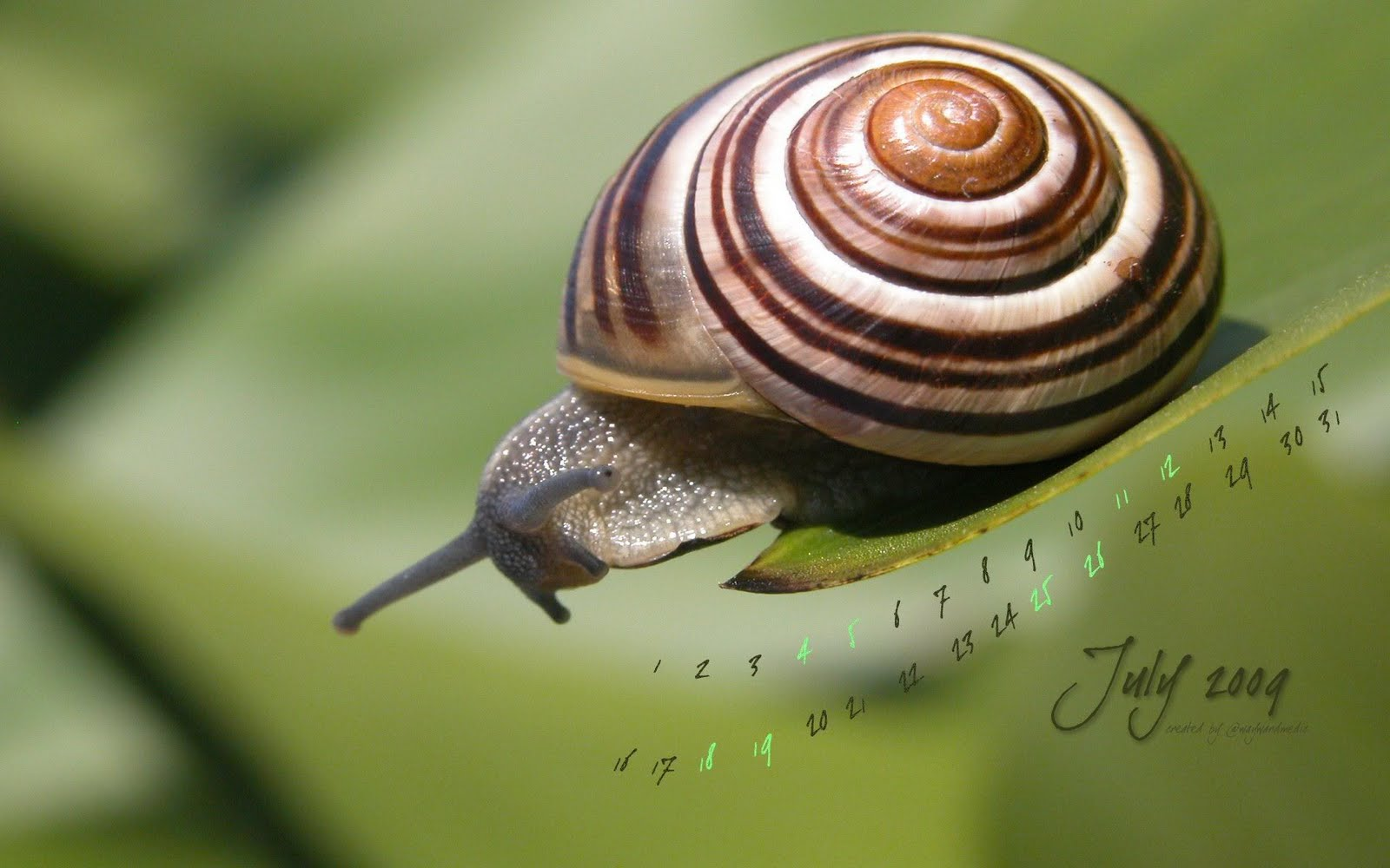 For Your Desktop:  Top Quality Snail Wallpapers, B Snail Wallpapers HD Download 1600x1000