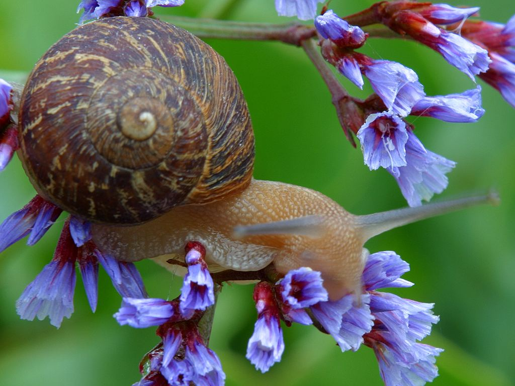 Snail Computer Wallpapers, Desktop Backgrounds  ID: 1024x768