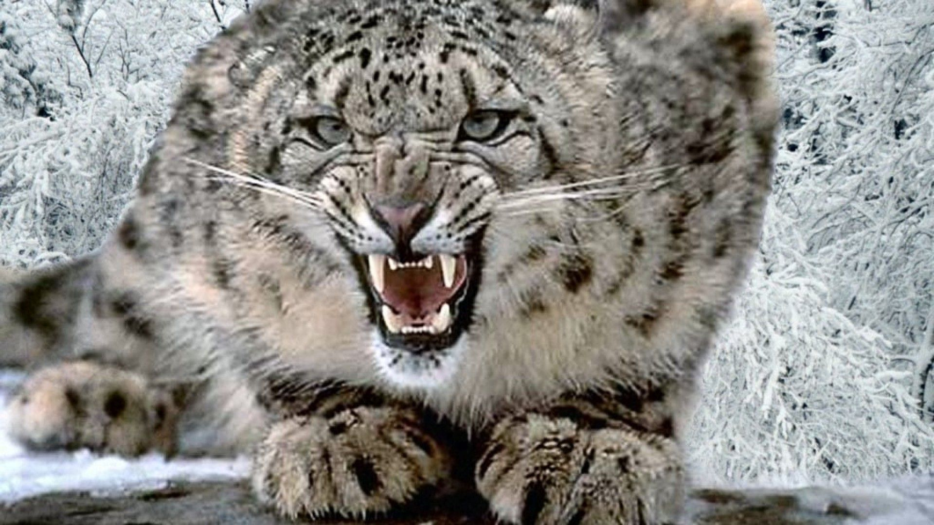 os x snow leopard free download