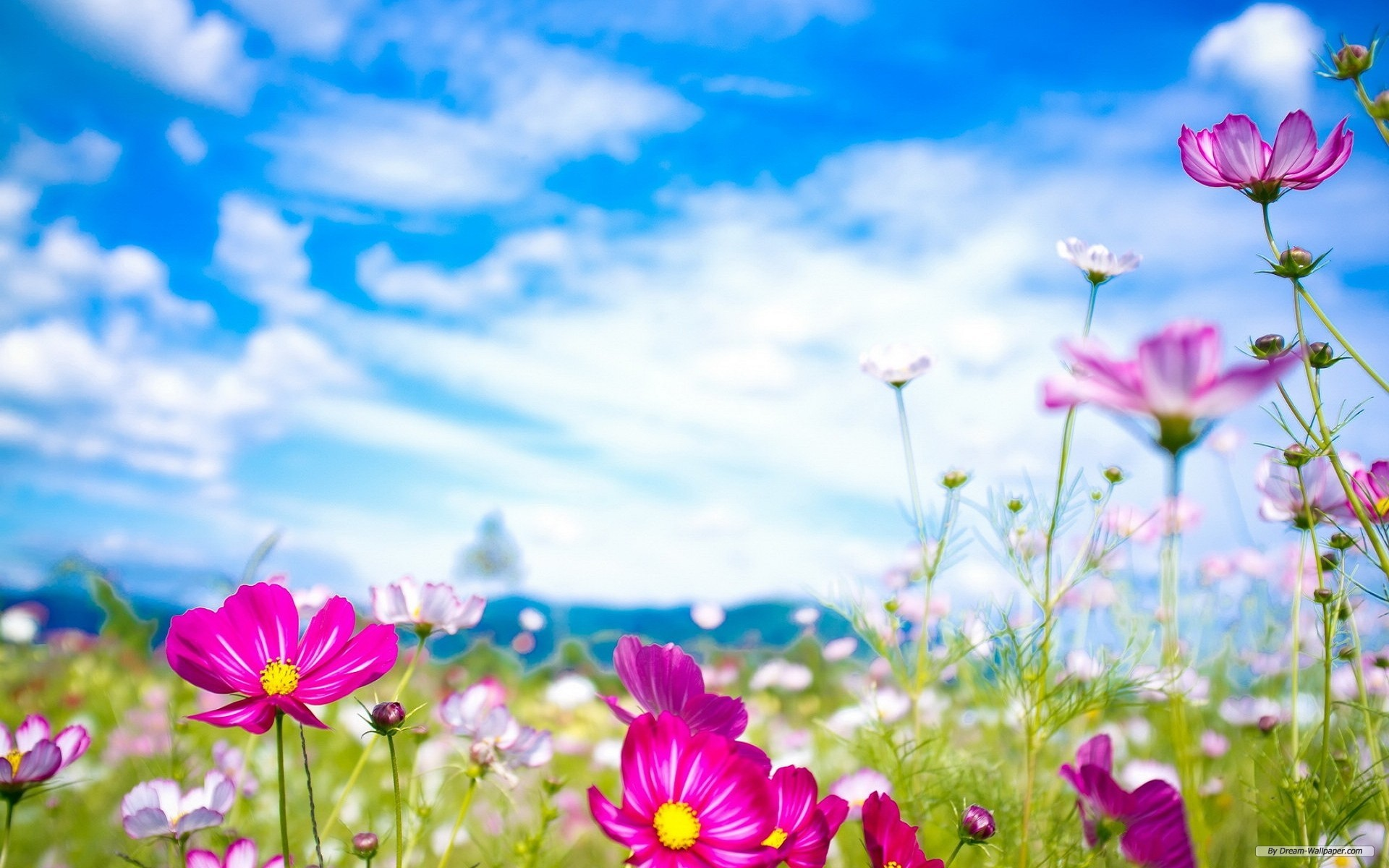 Spring Flowers Wallpapers 53 Wallpapers – Adorable