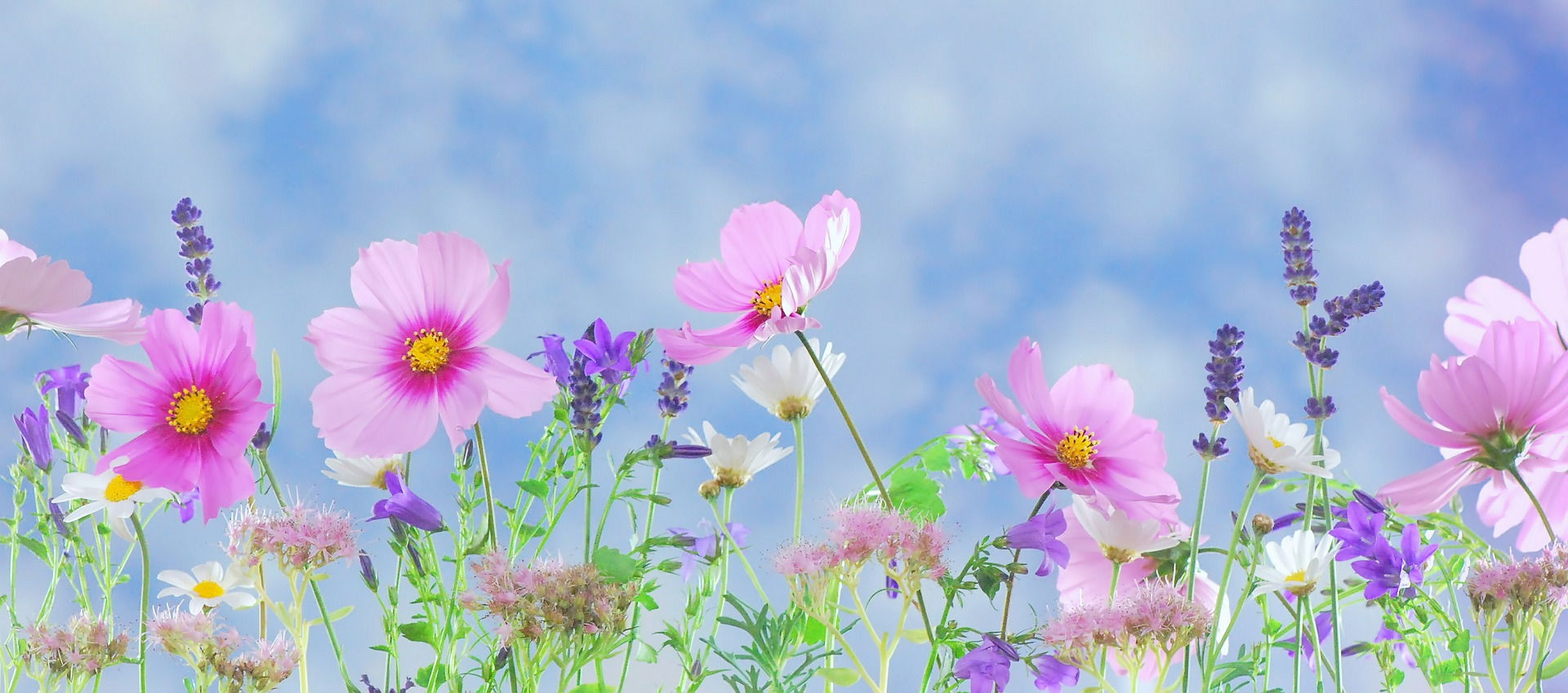 spring flowers  New Spring Flowers wallpaper download  Flowers 1920x849