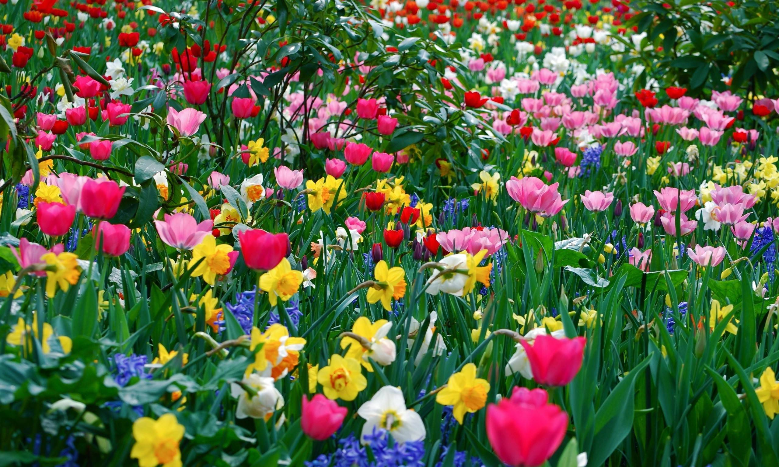 Spring flowers wallpaper free stock photos download (, Free 2560x1536