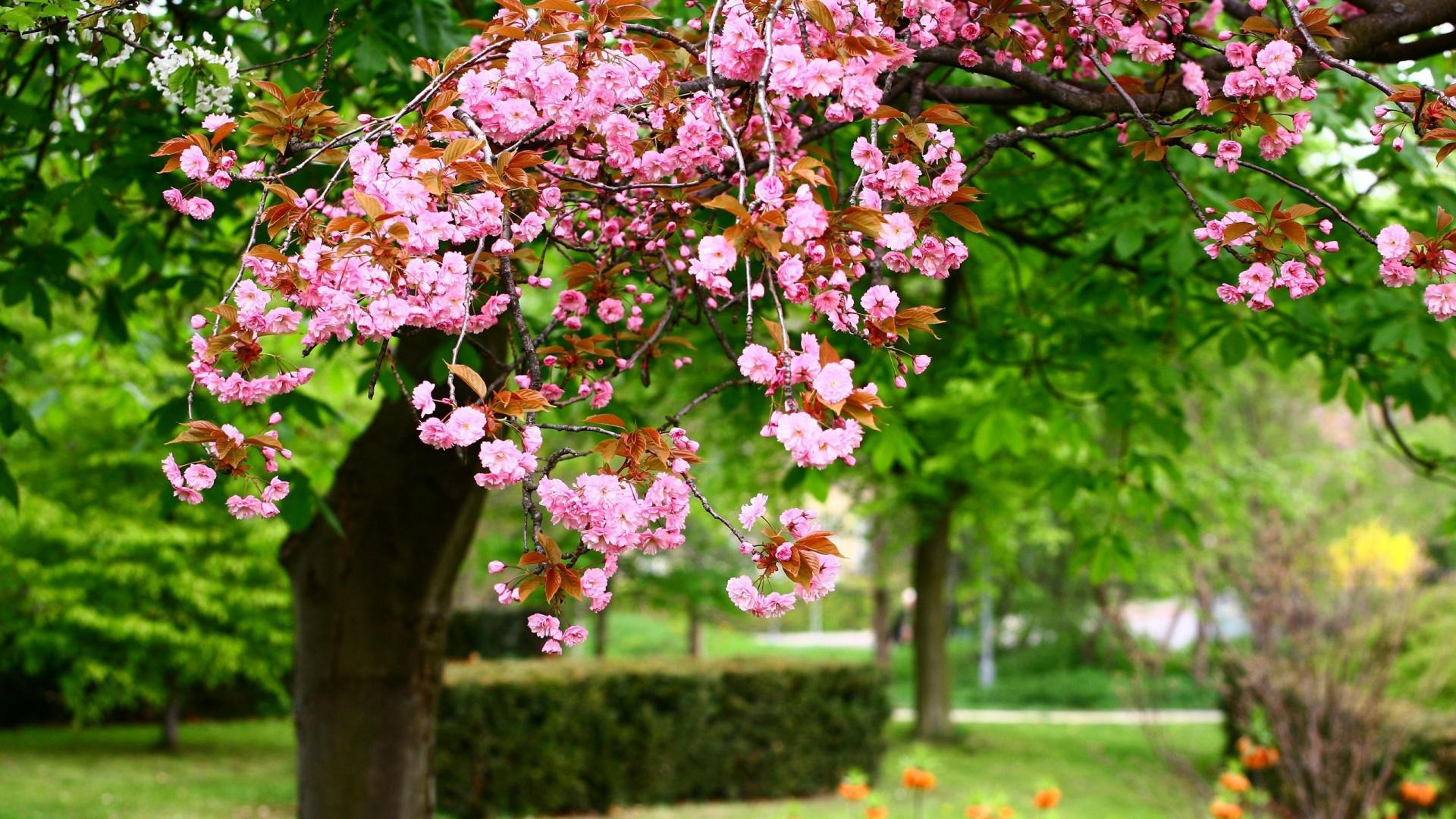 Spring flowers wallpaper desktop best spring flowers images 1920x1080 mightylinksfo