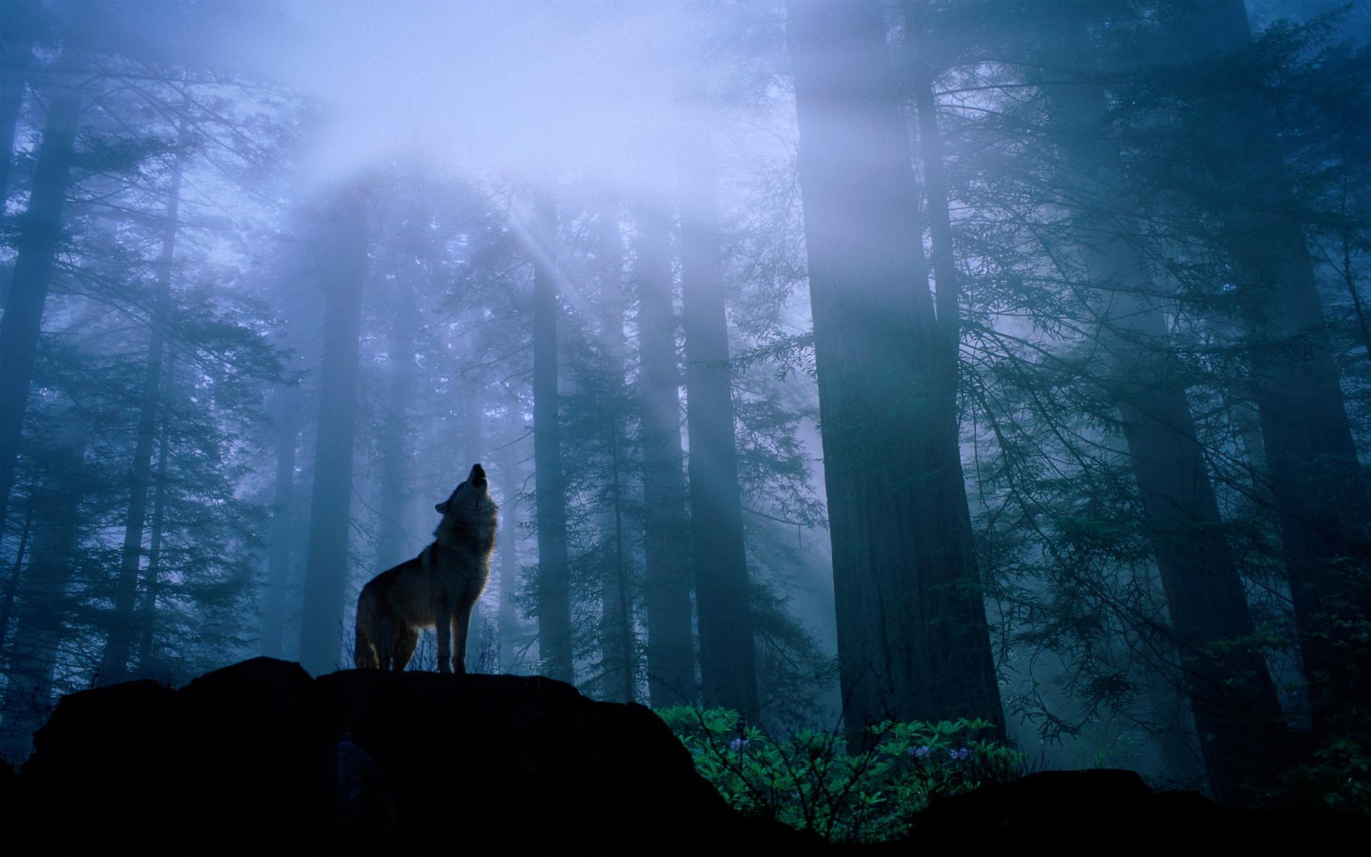 Into The Woods Hd Desktop Wallpapers Wallpapers Cabin In The Woods