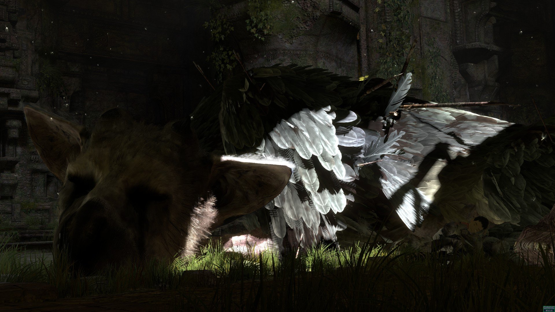 the last guardian hd - photo #12