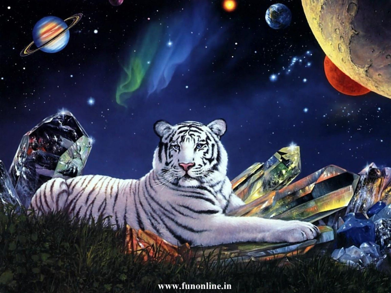 tiger and lion wallpapers 34 wallpapers u2013 adorable wallpapers