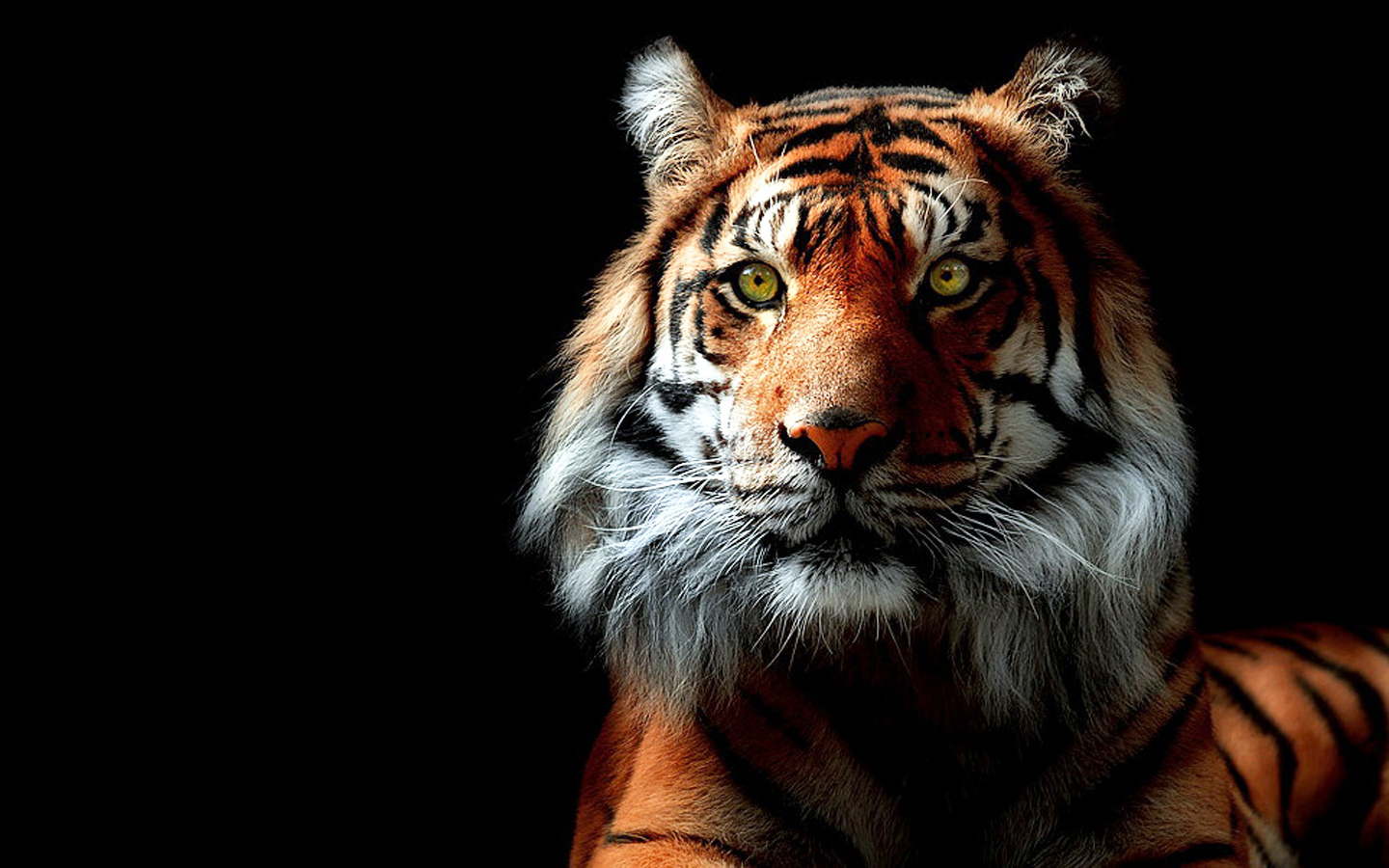 Tiger Wallpapers HD Group 1440x900