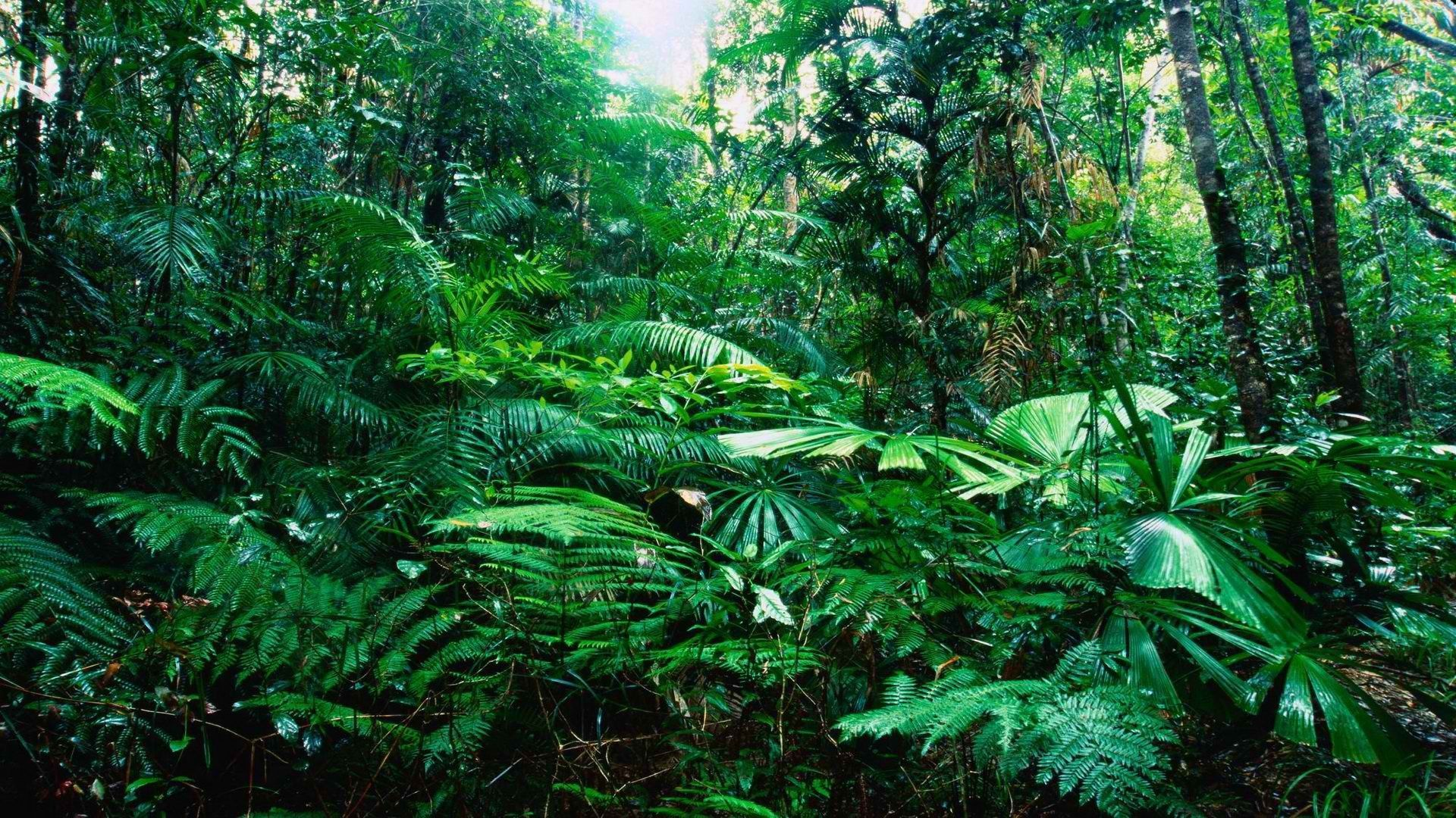tropical jungle wallpapers 49 wallpapers