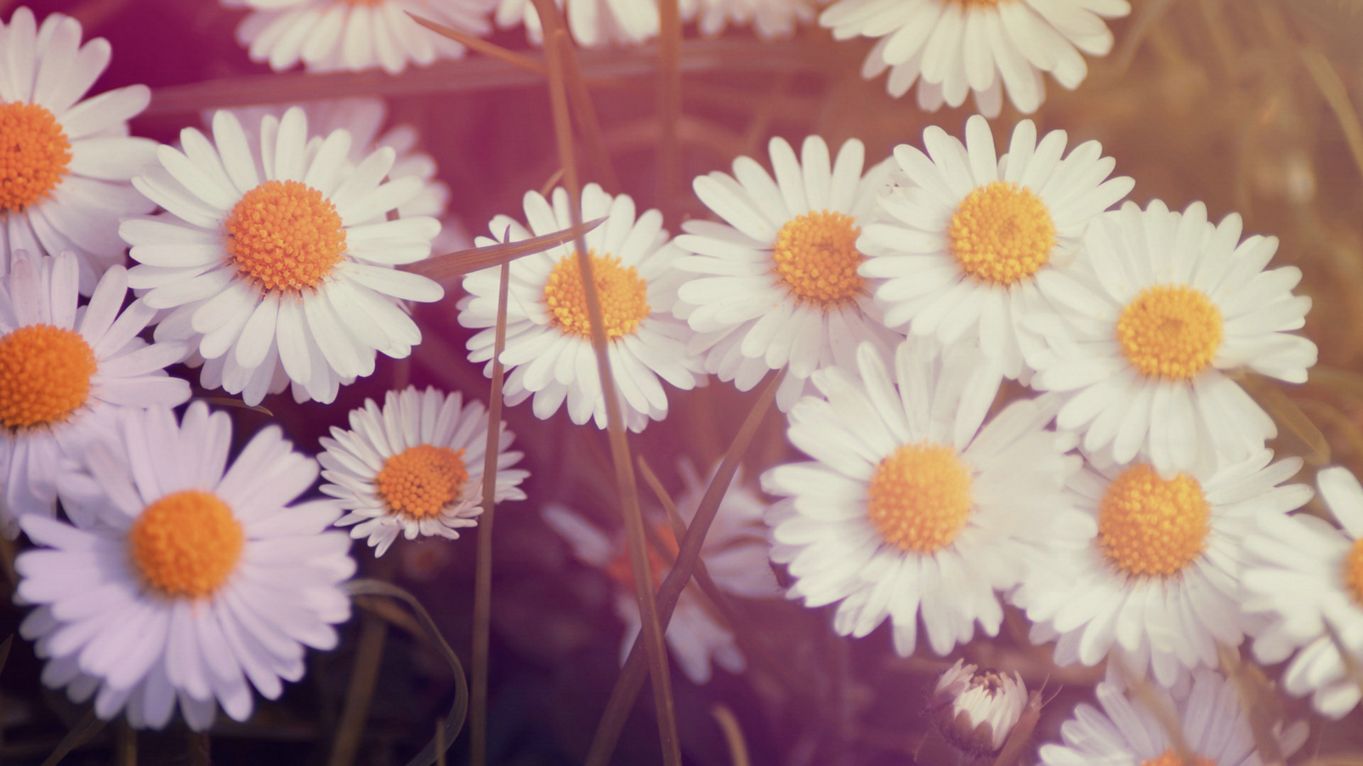 Images of wallpaper tumblr flower spacehero vintage flower wallpapers tumblr 34 wallpapers izmirmasajfo