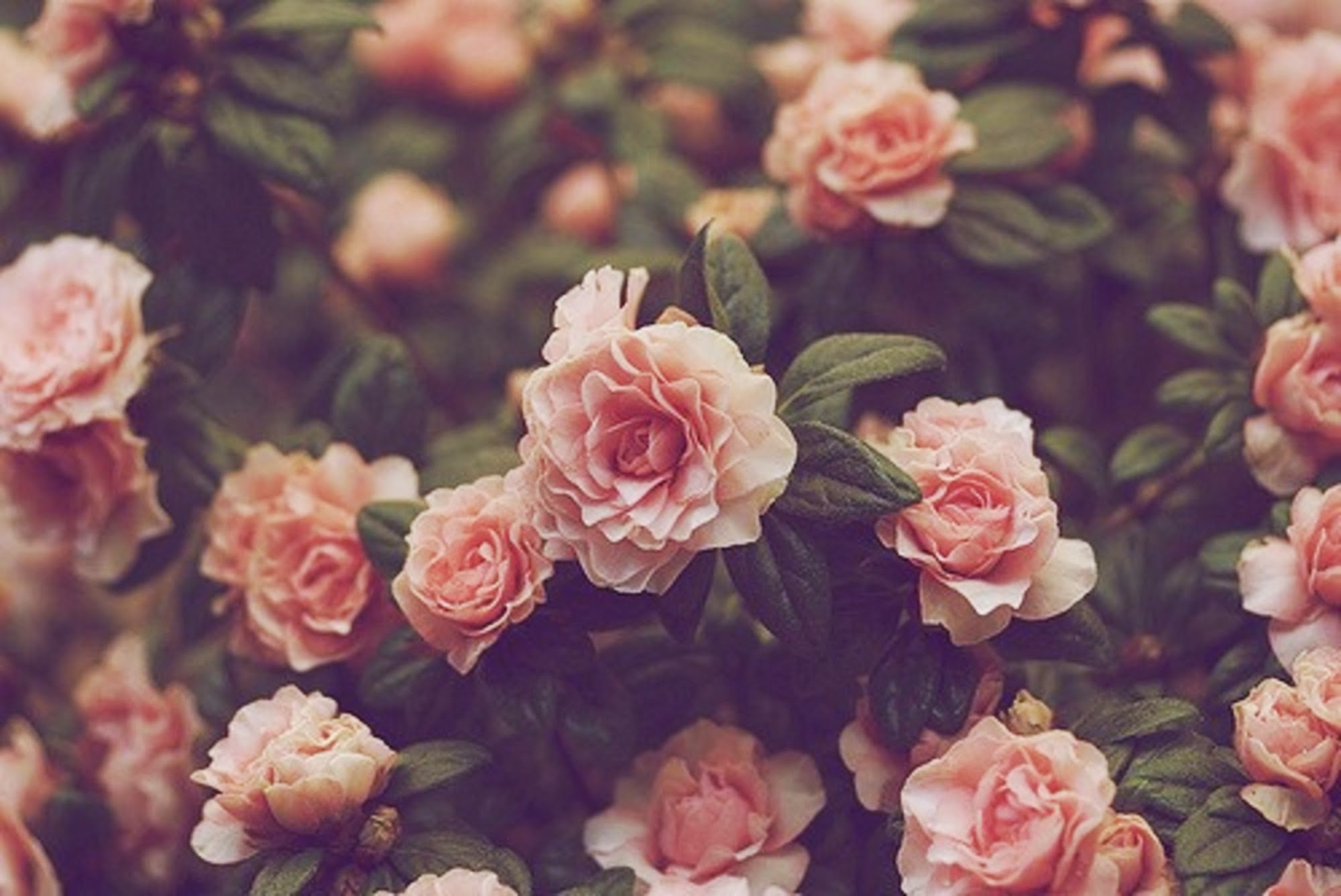 Vintage Floral Iphone Background