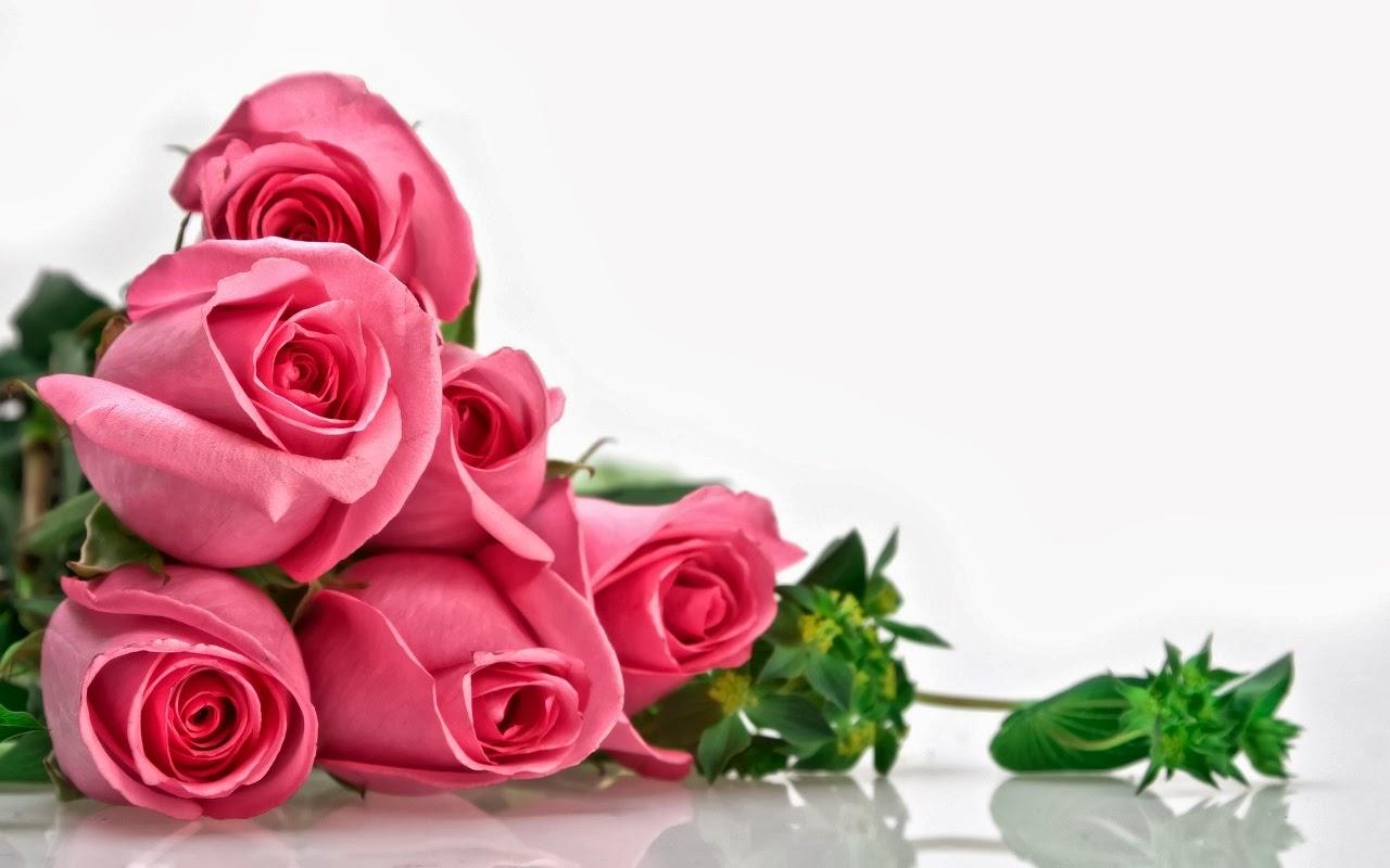 Unduh 9900 Koleksi Gambar Bunga Yg Cantik Untuk Wallpaper Terbaik