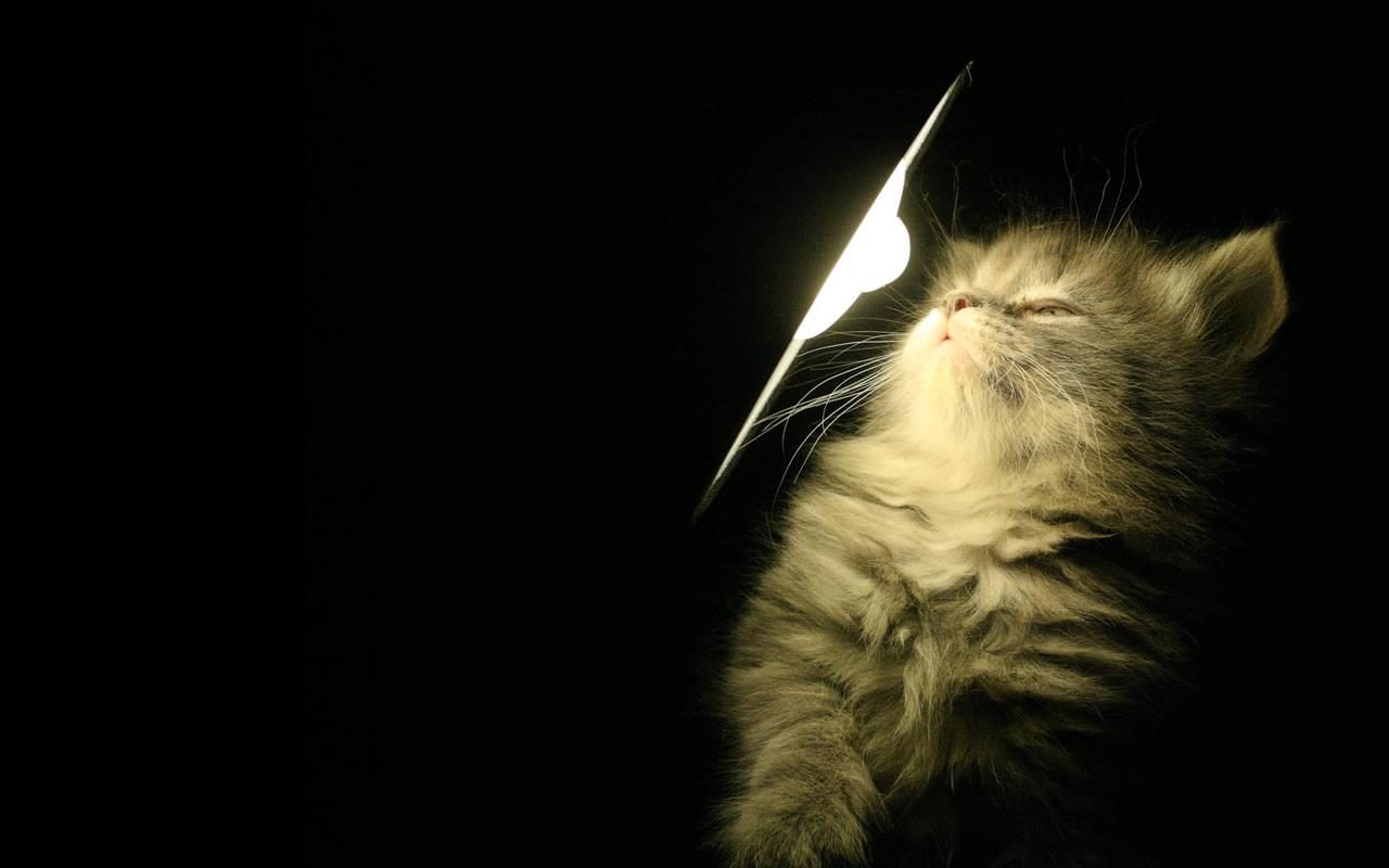 Best Ideas About Cat Wallpaper On Pinterest Iphone Wallpaper 1280x800